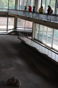 Vizită la Edificiul cu Mozaic