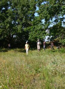 Situl neolitic Cetățuia