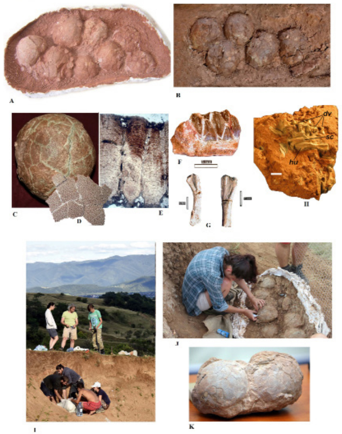 Dinosaur eggs and neonate remains