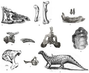 Dinosaurs and other contemporary reptiles