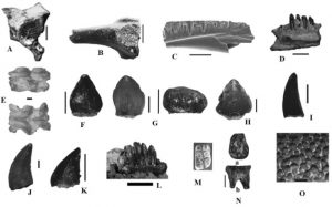 Discoveries after 1977. Microvertebtates. Amphibians